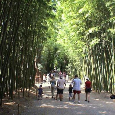 Bambouserai 1